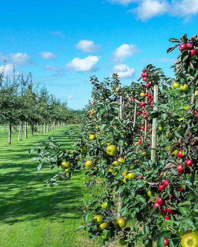 Fertilizantes para potenciar tus cultivos